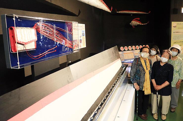 リュウグウノツカイの革を使ったハンドバッグ(左)に見入る来館者