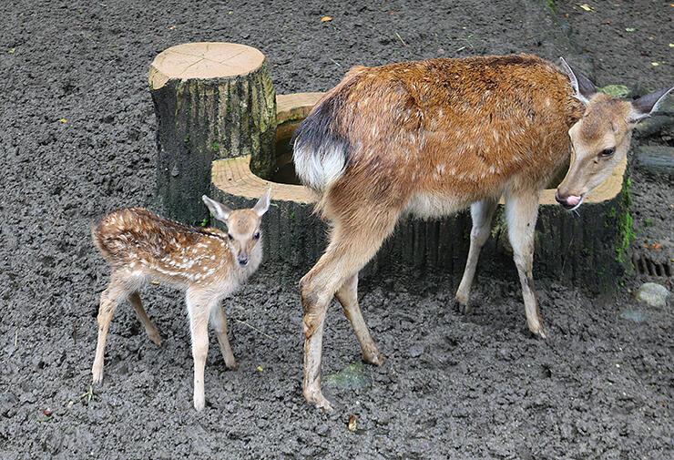 母親のオリヒメ(右)に寄り添うスガル