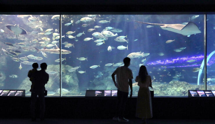 開館30周年を迎えたマリンピア日本海の日本海大水槽=27日、新潟市中央区