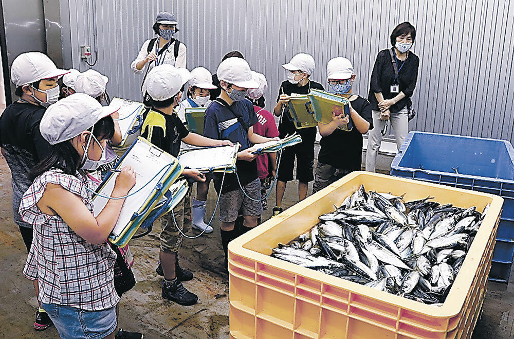 鮮魚の保管庫を見学する児童=能登町宇出津港水産物鮮度保持施設