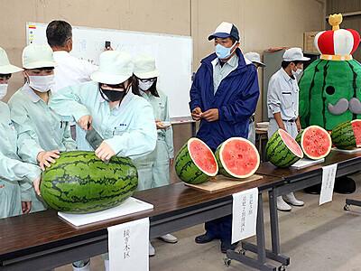 研究栽培のジャンボ西瓜 十分な甘さ 入善高生が糖度測定