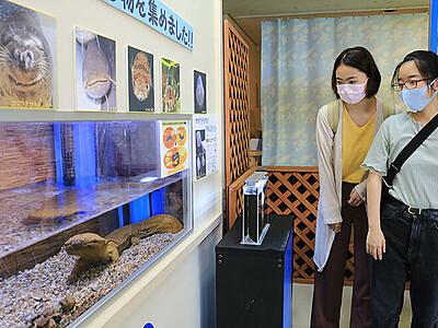 魚の顔ってかわいい! 魚津水族館「魚面展」