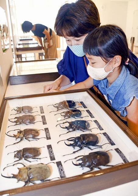 100種類以上の標本が並ぶ「世界のカブトムシ・クワガタ展」=8月1日、福井県美浜町エネルギー環境教育体験館きいぱす