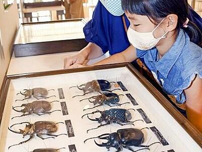世界のカブトムシなど100種超展示 福井県美浜町で