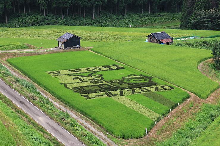 エールを送るイラストが浮かび上がった「稲作アート」