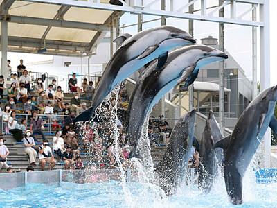 イルカショー再開 久々の歓声 新潟・マリンピア日本海