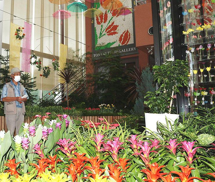 色鮮やかな花が並び、夏らしい雰囲気が漂う会場=チューリップ四季彩館