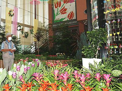 色鮮やか熱帯植物 砺波・チューリップ四季彩館