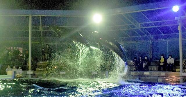 ライトを浴びてジャンプするイルカ=福井県坂井市三国町崎の越前松島水族館