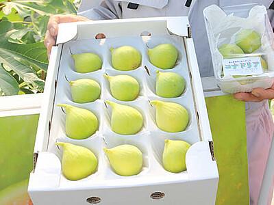 皮ごと味わう小粒イチジク 福岡地域で収穫期