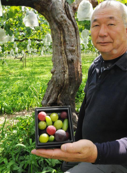4〜6品種のブドウの粒を詰め合わせた「信州宝石箱」のサンプルを持つ渡辺社長