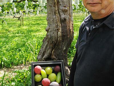 ブドウの宝石箱 東御の農園、旬を詰め合わせ