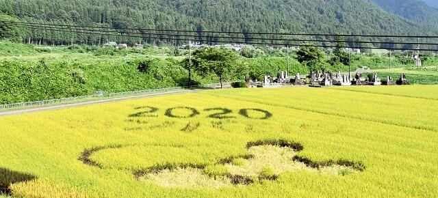「2020ガンバロウ」の文字とネズミの絵が描かれた田んぼアート=8月24日、福井県大野市御給