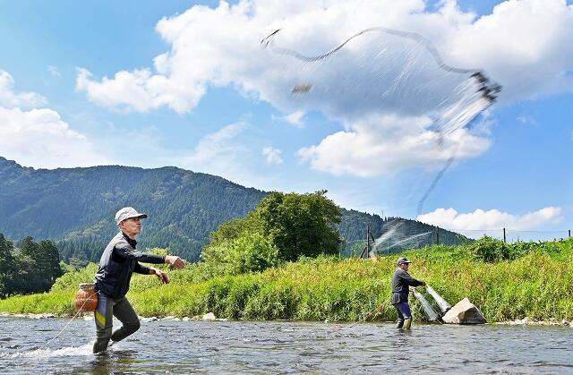 青空の下、投網でアユを取る愛好者=9月1日、福井県福井市朝谷町