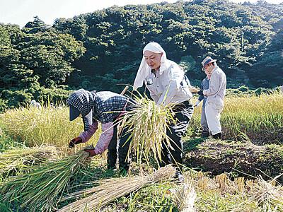 輪島の千枚田 コロナ禍の中、有志稲刈り