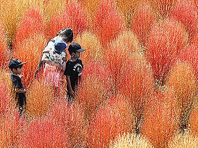 秋色グラデーション 砺波チューリップ公園