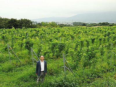 ブドウ実る秋「黄金の丘」に 南砺産ワイン醸造開始