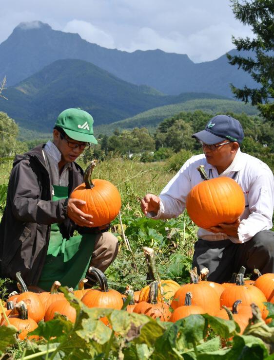 収穫した観賞用カボチャを選別する奥さん(右)ら=9日、原村