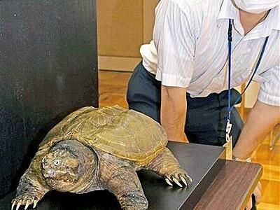 動植物収集30年の軌跡 福井県自然保護センターで特別展