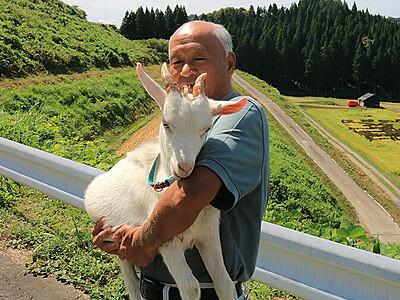 大きくなったね、モコ 魚津の金森さん 子ヤギ親身に育てる