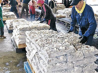 能登・小木港 アカイカ漁、来季も継続