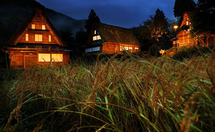 世界遺産の集落が実りの秋を迎えた中、ライトアップされた合掌造り家屋=南砺市相倉