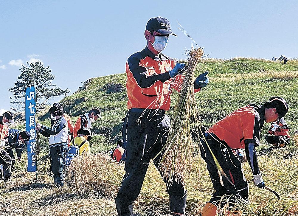 稲刈りに励む参加者=輪島市の白米千枚田