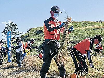 千枚田、稲刈りに汗 輪島