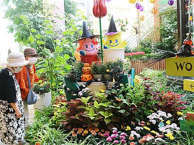 魔女の仮装、秋の花と共演 砺波の四季彩館