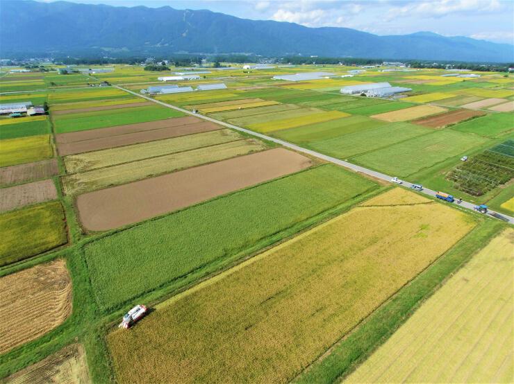稲刈りが最盛期を迎えた八ケ岳山麓。収穫を終えた水田や作物が育つ畑がパッチワークのような模様を描く=22日午前9時53分、富士見町立沢(地権者らの承諾を得て小型無人機で撮影)