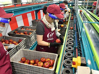 リンゴが届ける復旧の便り 長野の集出荷施設