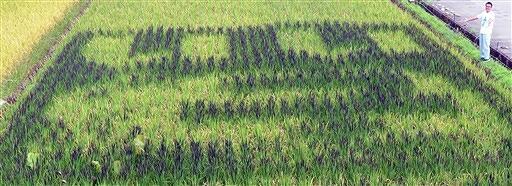 「いい子」の文字を古代米で形作った田んぼアート=9月22日、福井県永平寺町栃原