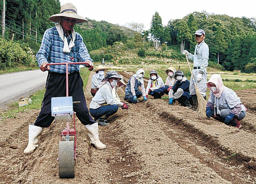 能登伝統野菜の唐川菜の種を植えるメンバー=穴水町下唐川