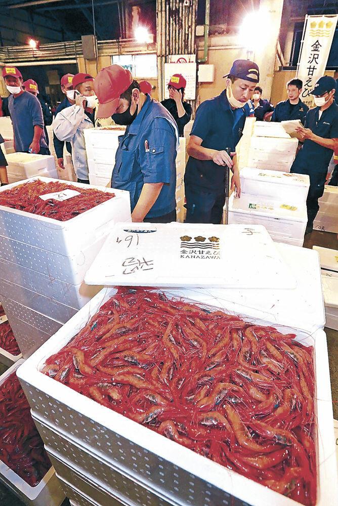 初競りにかけられた「金沢甘えび」=30日午後8時50分、石川県漁協かなざわ総合市場