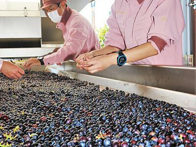 実りの秋、塩尻でワインの仕込み メルシャンのワイナリー