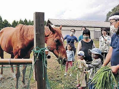 農園で元競走馬と交流、珠洲、観光資源に活用へ