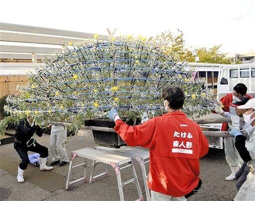 慎重に会場に搬入される千輪菊=10月5日、福井県越前市武生中央公園