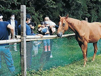 引退競走馬24時間一緒に 珠洲・鉢ケ崎ケビン、馬場を整備 来月から宿泊プラン