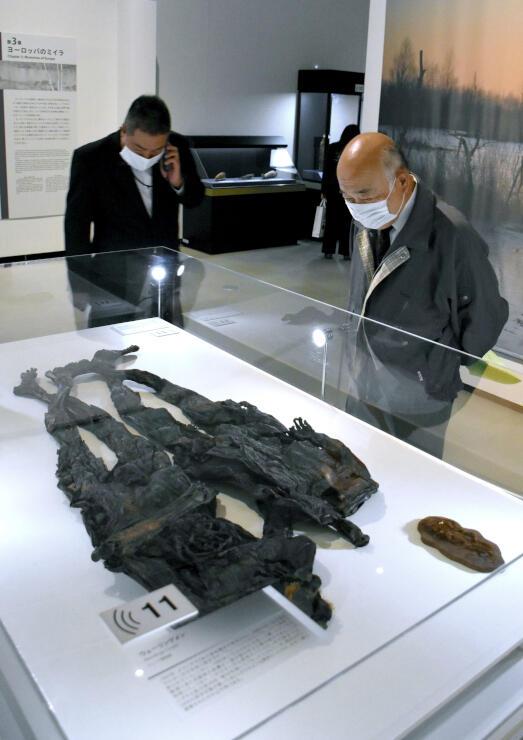 世界各地のミイラが展示されている「特別展ミイラ」=9日、新潟市秋葉区の新津美術館