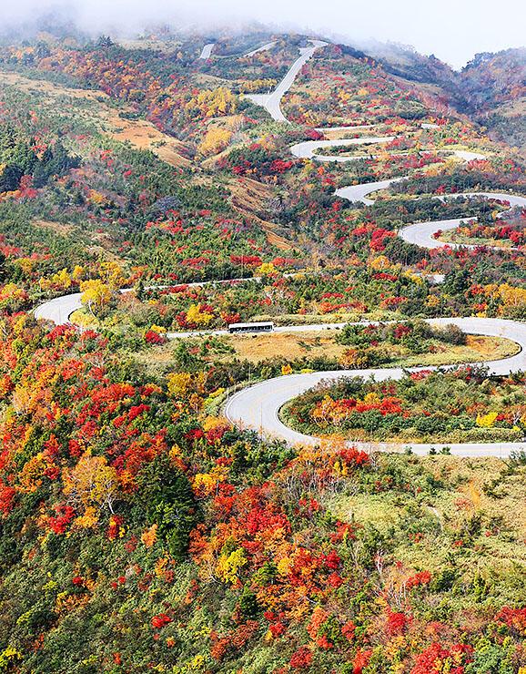 紅葉が見頃を迎えた立山黒部アルペンルートの七曲周辺