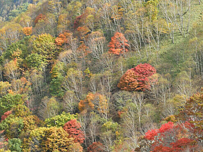 鷲ケ峰、霧のち紅葉 緑の木々とコントラスト
