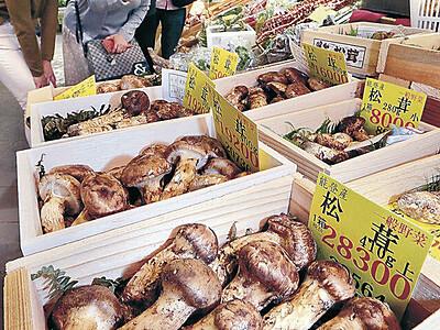 マツタケ豊作 県産も安い、店頭に並ぶ