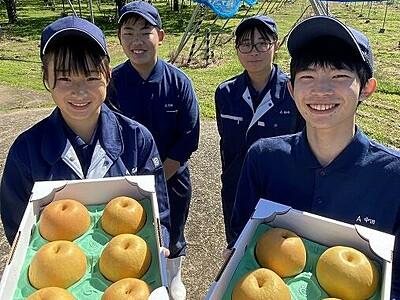 高校生が育てた梨が「ふるさと納税」返礼品に 福井県の坂井高校、大玉の品種「新興梨」