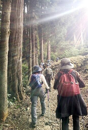 山頂部の一乗谷城跡を目指し山道を登る参加者=10月18日、福井県福井市