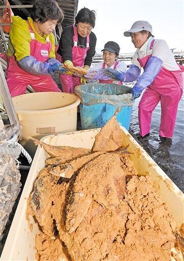 海風を受け熟成したサバのへしこを樽から取り出す女将たち=10月21日、福井県美浜町丹生