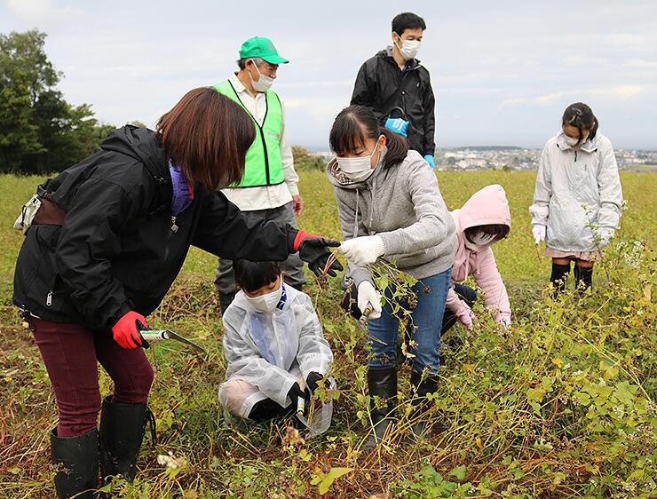 ソバを収穫する参加者