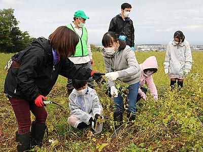 休耕田のソバ刈り取り体験 黒部、11月21日にまつりで提供