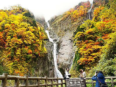 際立つ秋色 称名滝の紅葉
