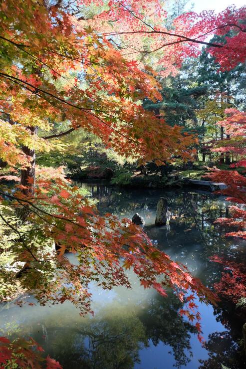 樹木の葉越しに景色の奥行きを楽しむのもお薦め=2017年11月10日、新発田市の清水園