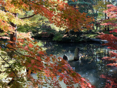 紅葉、日本庭園、郷土料理 新潟を満喫 日帰りバスツアー